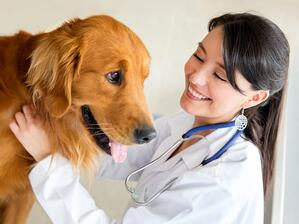 moving with a dog find a vet