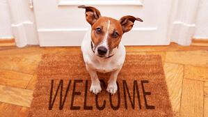 Reliable Movers' Tips on Moving With Pets