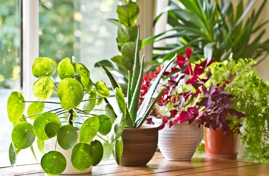 National Movers' Tips on the Best Way to Move Plants to Your New Home